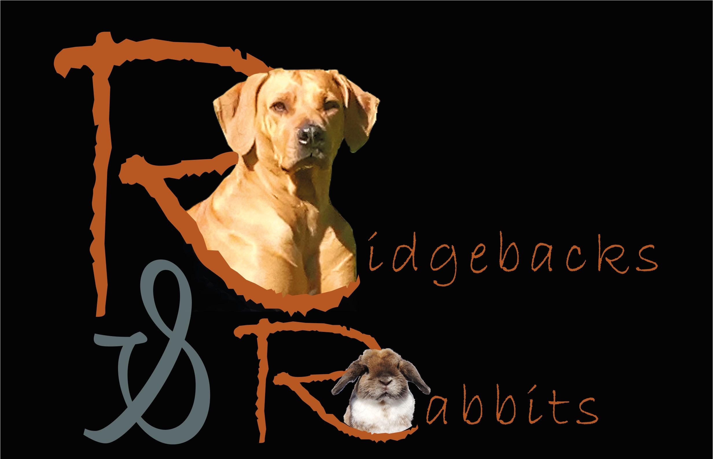 Ridgebacks & Rabbits